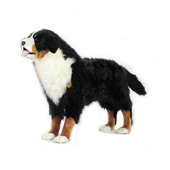 "Bernese Mtn Dog Standg 49""l"
